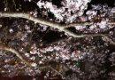 城崎温泉に行きました!